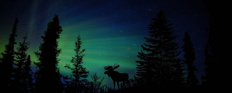 celebrar la Navidad al estudiar en el extranjero: Canadá